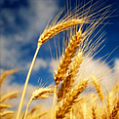 STRATEGIC OPTIONS DEVELOPMENT FOR RUSSIAN GRAIN PRODUCTION INDUSTRY